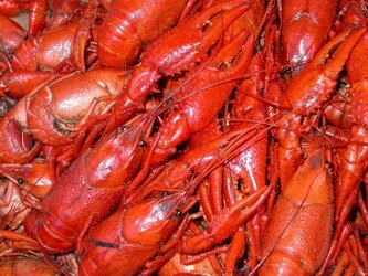 crawfish-091.jpg